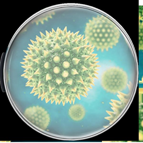 filtro alergias Mitsubishi
